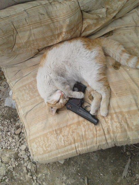 За що котам в АТО треба поставити пам'ятник-4 - фото 21