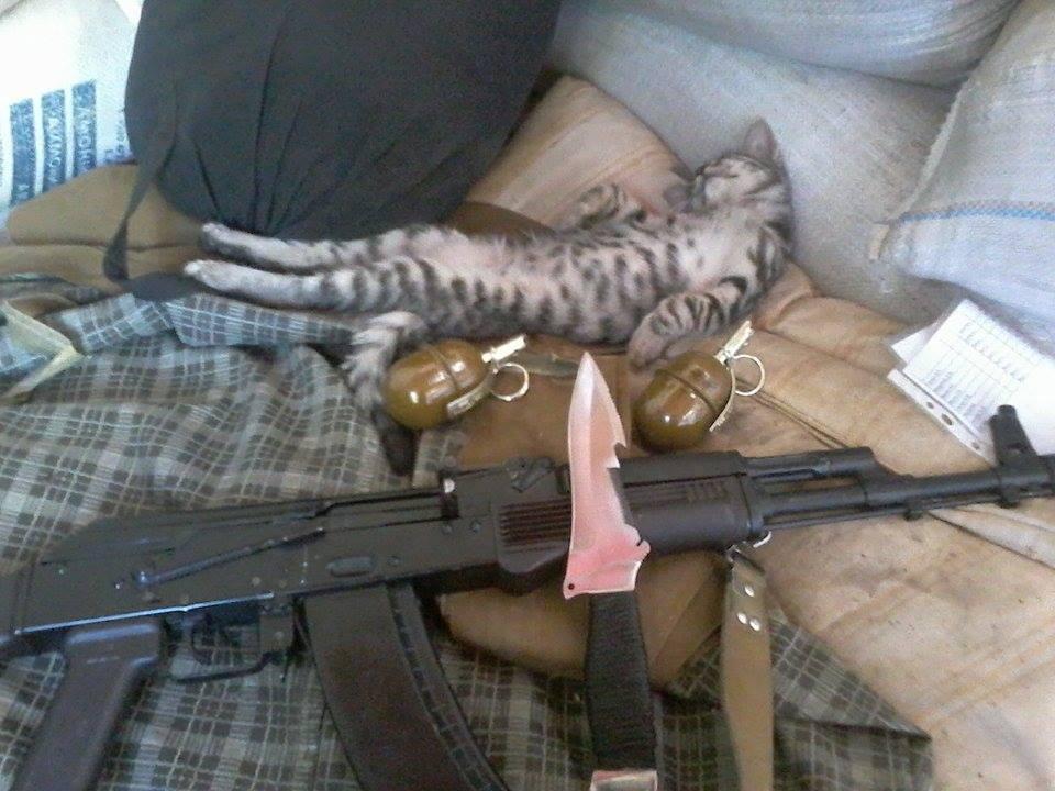 До Міжнародного дня котів: Як мурчики рятують Україну - фото 2