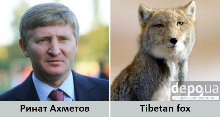 Політики та тварини: Які звіри сплять в Яценюкові, Ляшку і Парасюку - фото 18