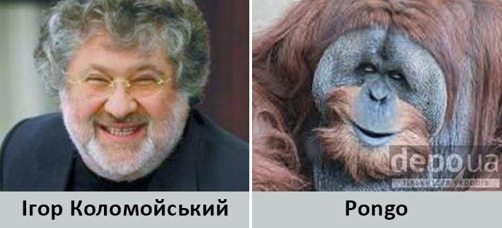 Політики та тварини: Які звіри сплять в Яценюкові, Ляшку і Парасюку - фото 17