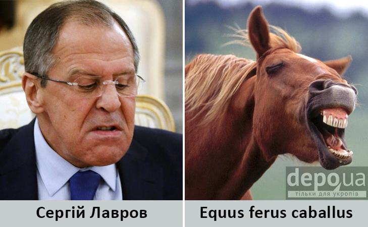 Політики та тварини: Які звіри сплять в Яценюкові, Ляшку і Парасюку - фото 5