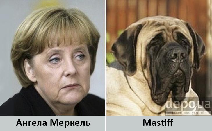 Політики та тварини: Які звіри сплять в Яценюкові, Ляшку і Парасюку - фото 6