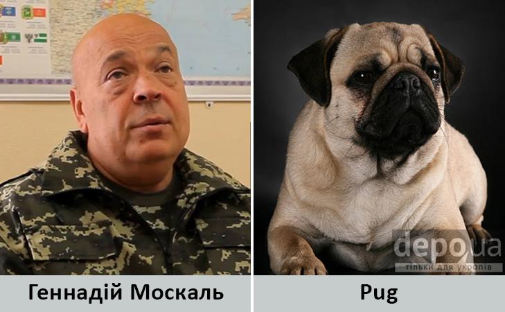 Політики та тварини: Які звіри сплять в Яценюкові, Ляшку і Парасюку - фото 11