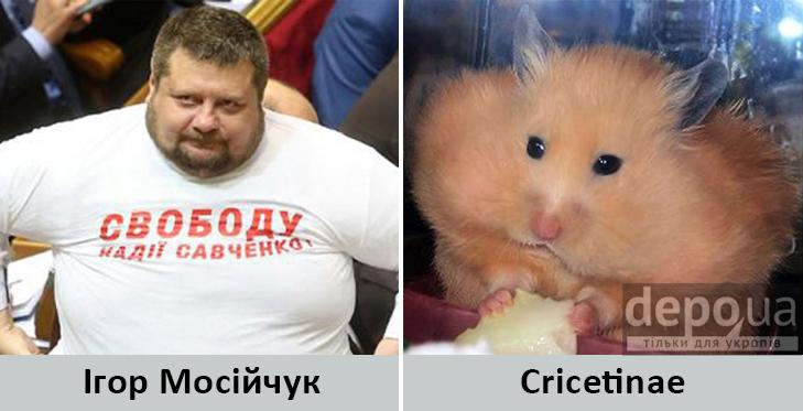 Політики та тварини: Які звіри сплять в Яценюкові, Ляшку і Парасюку - фото 1