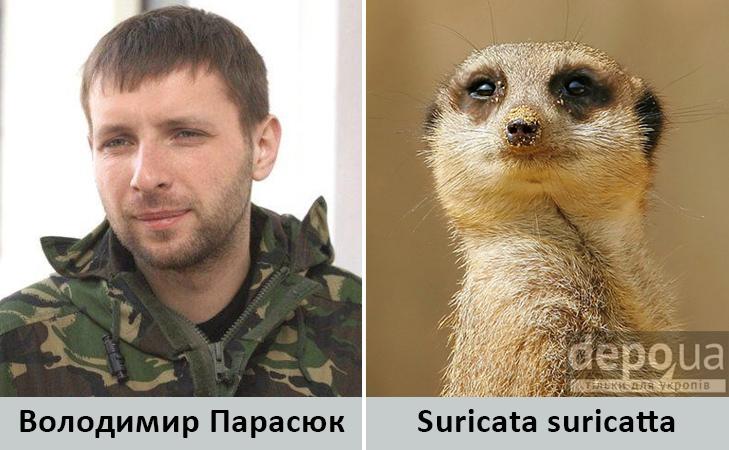 Політики та тварини: Які звіри сплять в Яценюкові, Ляшку і Парасюку - фото 8