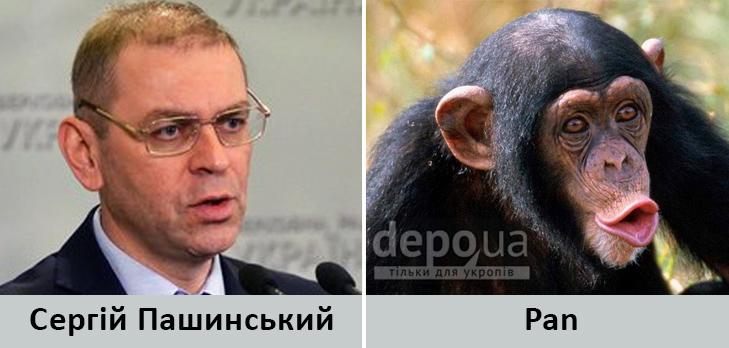 Політики та тварини: Які звіри сплять в Яценюкові, Ляшку і Парасюку - фото 19