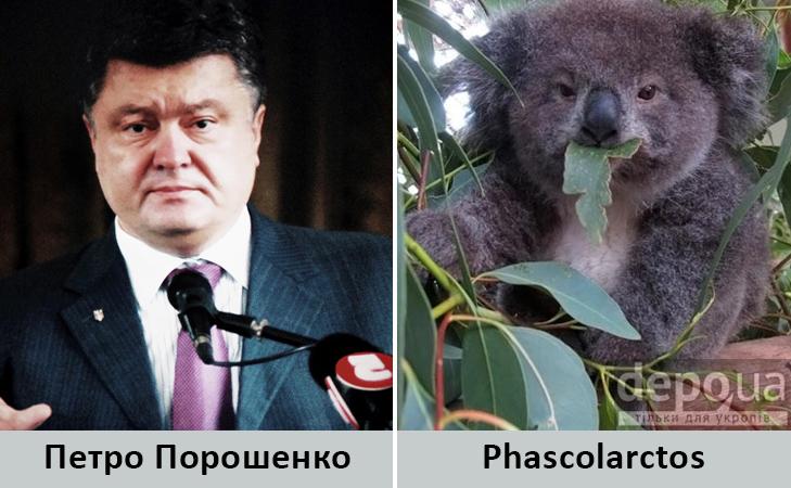 Політики та тварини: Які звіри сплять в Яценюкові, Ляшку і Парасюку - фото 14