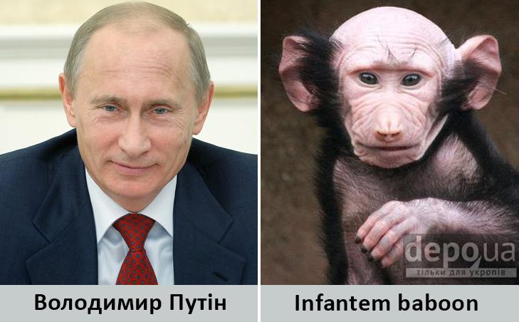 Політики та тварини: Які звіри сплять в Яценюкові, Ляшку і Парасюку - фото 4