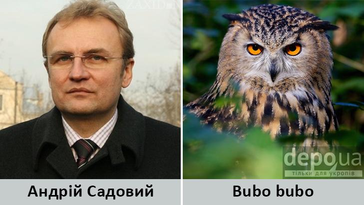 Політики та тварини: Які звіри сплять в Яценюкові, Ляшку і Парасюку - фото 10