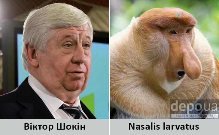 Політики та тварини: Які звіри сплять в Яценюкові, Ляшку і Парасюку - фото 7