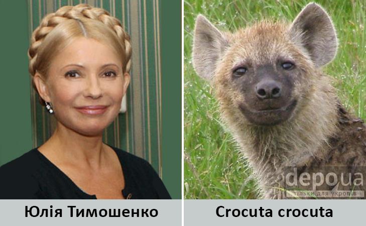 Політики та тварини: Які звіри сплять в Яценюкові, Ляшку і Парасюку - фото 15