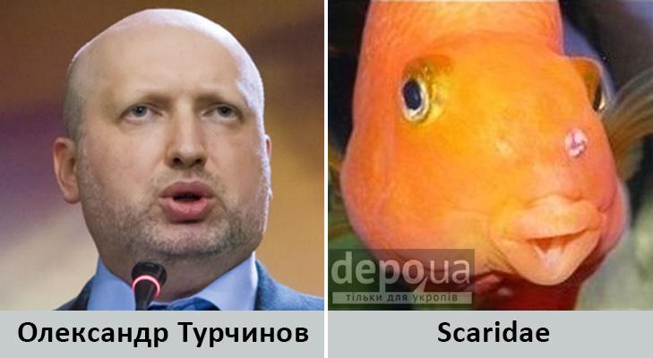 Політики та тварини: Які звіри сплять в Яценюкові, Ляшку і Парасюку - фото 12