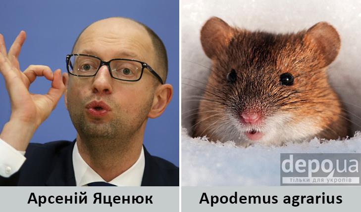 Політики та тварини: Які звіри сплять в Яценюкові, Ляшку і Парасюку - фото 16