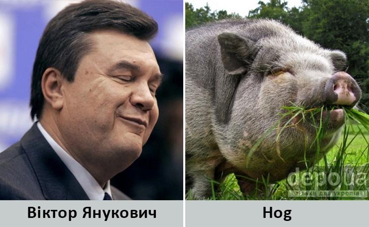 Політики та тварини: Які звіри сплять в Яценюкові, Ляшку і Парасюку - фото 20