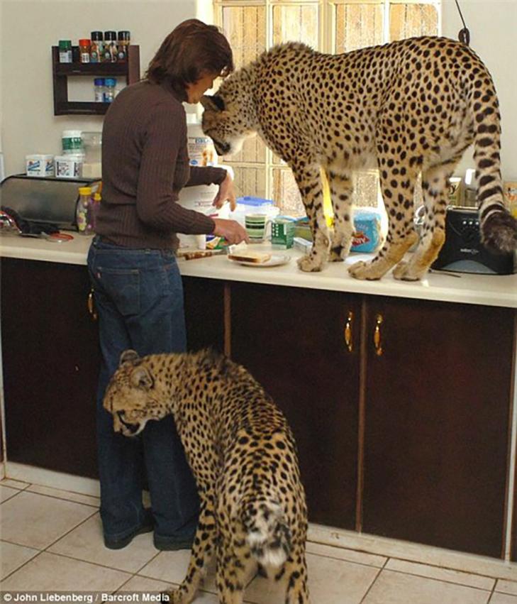 35 домашніх тварин, які вас здивують - фото 21