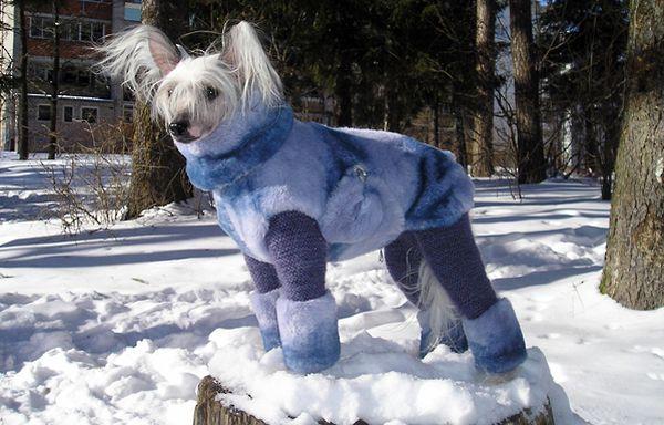 Холод собачий: ТОП-20 собак у зимовому одязі - фото 2