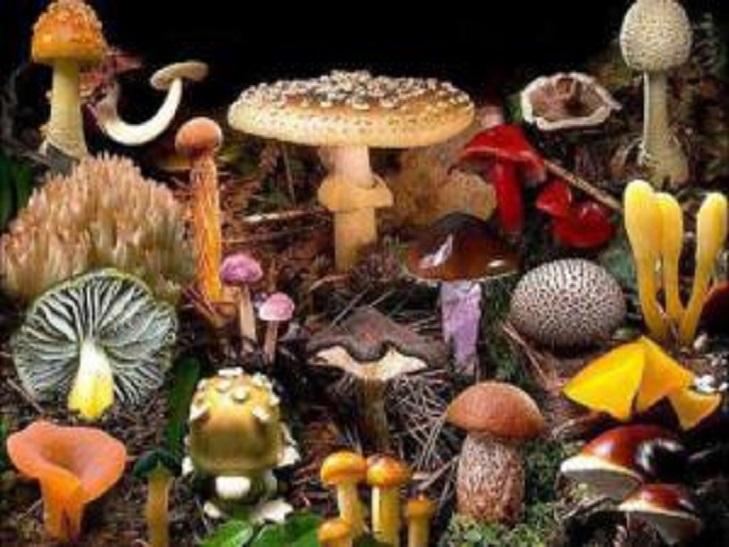 На Хмельниччині з початку сезона троє людей отруїлось грибами - фото 7