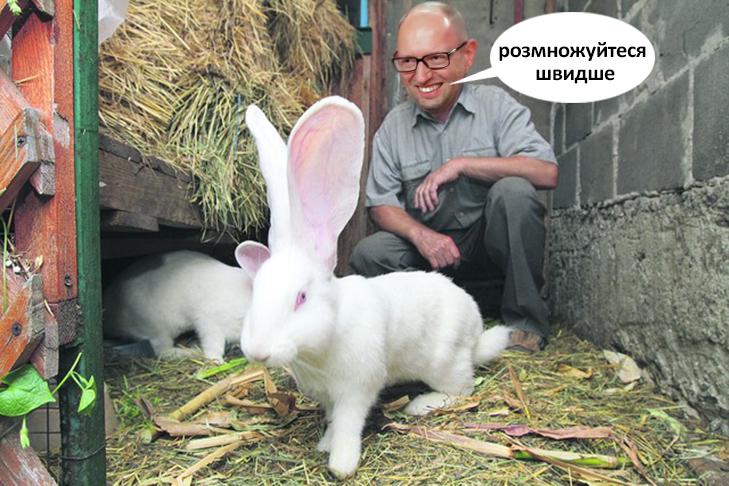 Що буде робити Яценюк у відставці (ФОТОЖАБИ) - фото 3
