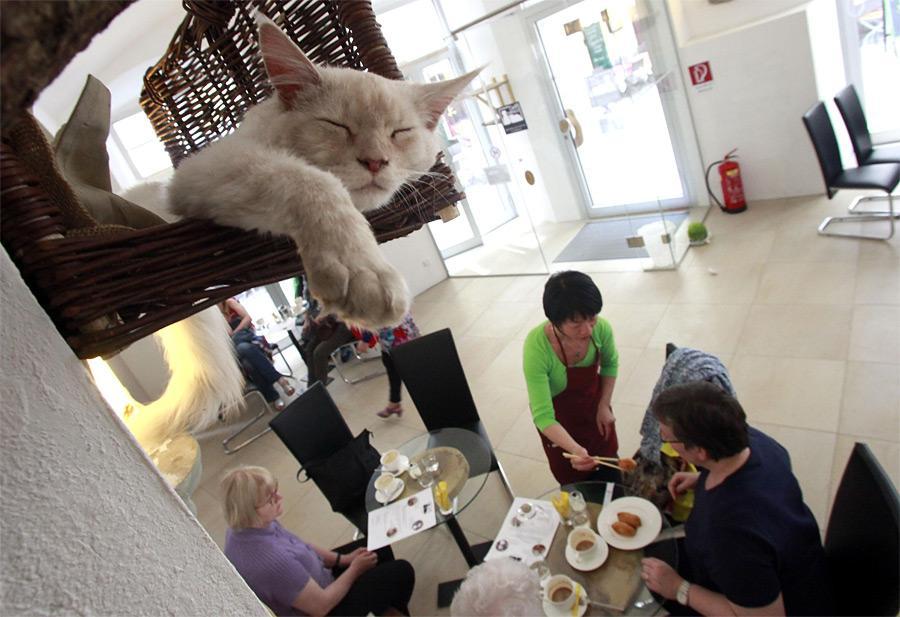 ТОП-5 котячих кафе у світі - фото 1