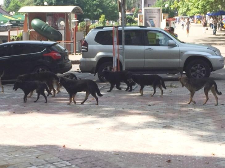 Куди у Миколаєві краще не потикатись, щоб не стати обідом для собак - фото 7