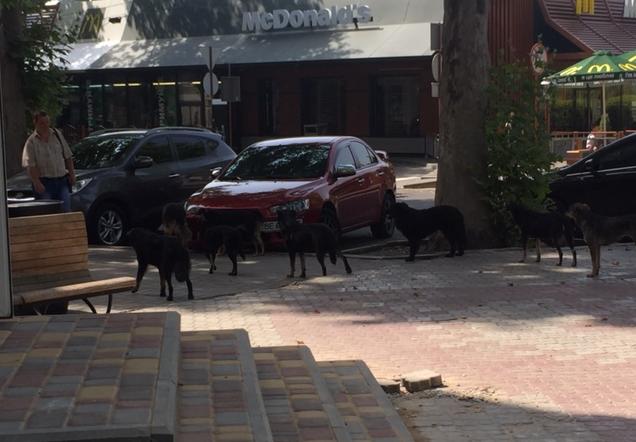 У центрі Миколаєва поліцейські рятували людей від навіженої зграї собак - фото 2