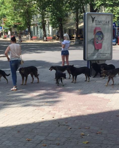 У центрі Миколаєва поліцейські рятували людей від навіженої зграї собак - фото 1