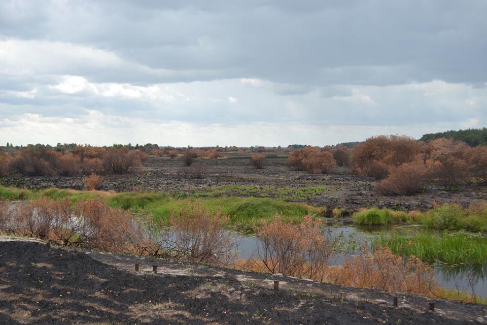 """""""Випалена земля"""": Пожежу в Чорнобильській зоні остаточно загасили - фото 1"""