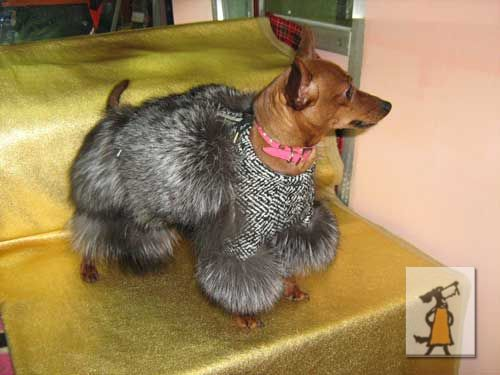 Холод собачий: ТОП-20 собак у зимовому одязі - фото 5