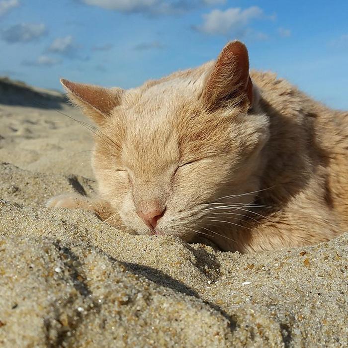 Як жінка врятувала 21-річного кота, взявши його з притулку - фото 4