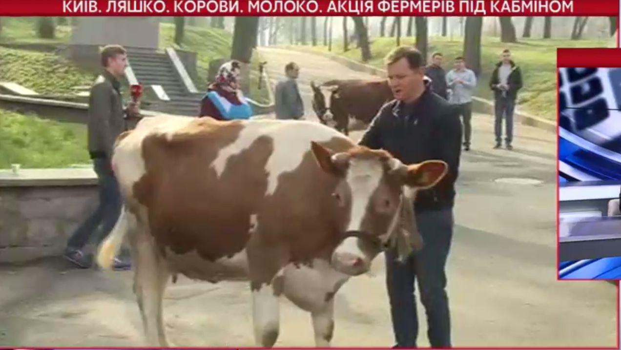 Ляшко влаштував коров`яче шоу під Кабміном - фото 4