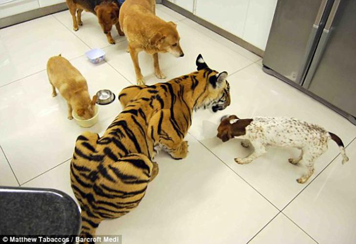 35 домашніх тварин, які вас здивують - фото 9