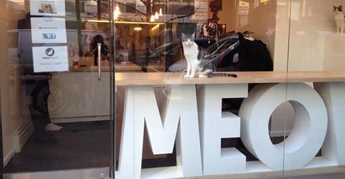 ТОП-5 котячих кафе у світі - фото 2