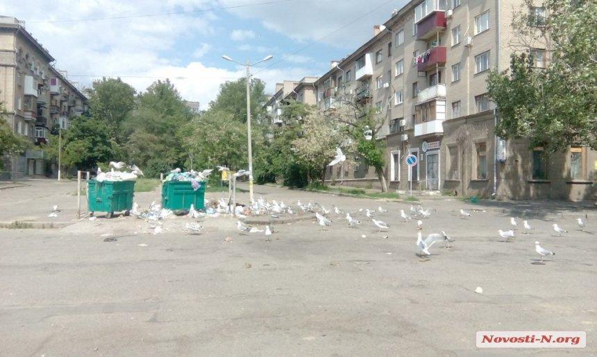 У Миколаєв сміттєві баки атакували чайки