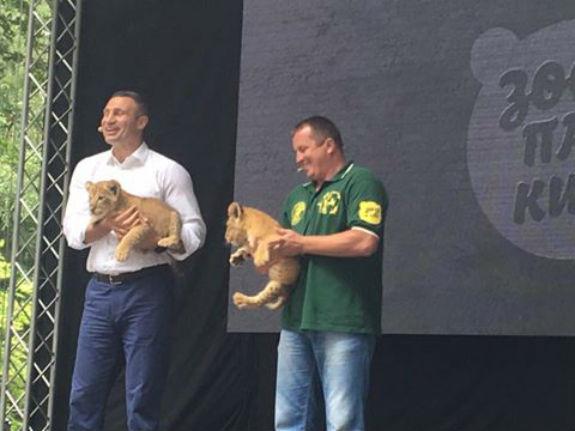 Як мер Кличко погрався з левеням у київському зоопарку  - фото 1