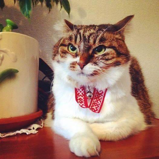 Як проходить День вишиванки у котів - фото 5