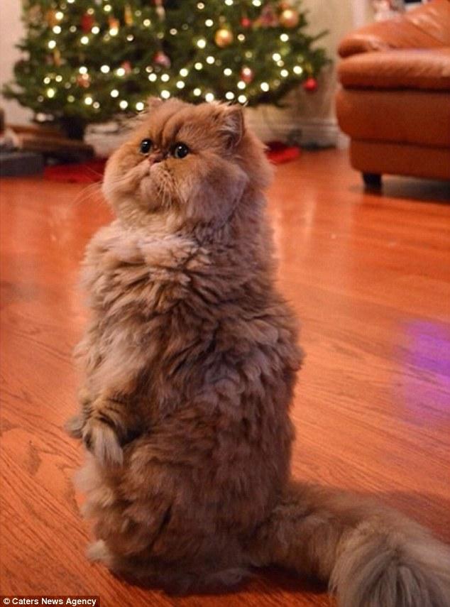 Як виглядає кішка, яка ненавидить Різдво  - фото 1