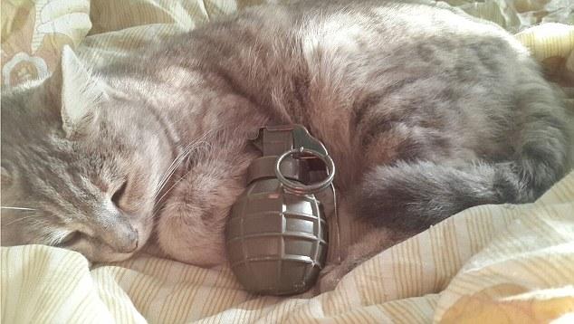 Як ІДІЛ вербує молодь за допомогою секретних повідомлень із милими котиками - фото 1