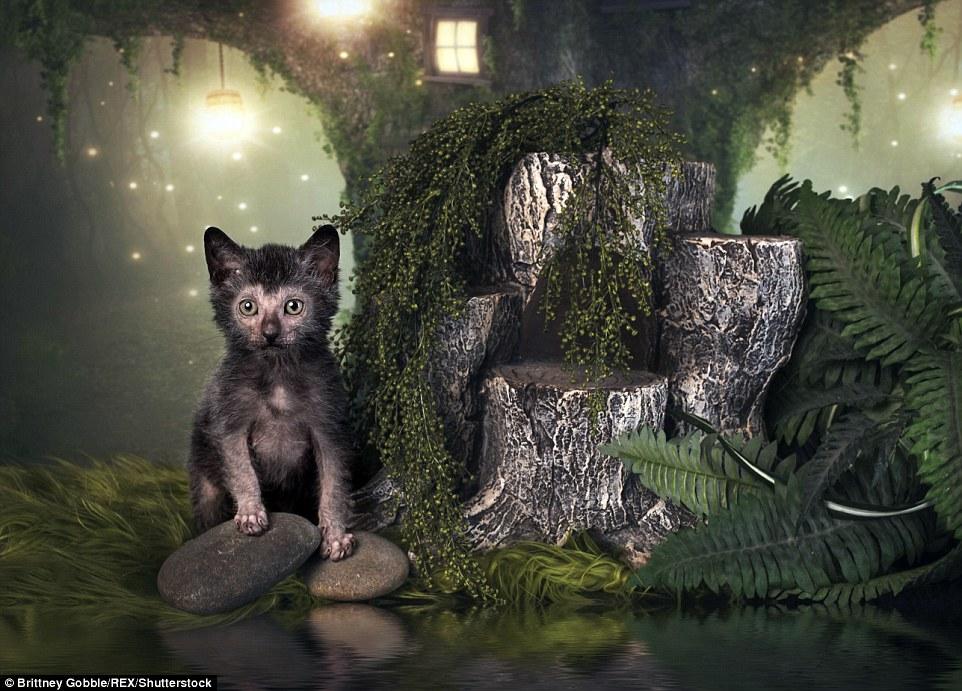 Страшного Різдва: фотосесія котів-перевертнів налякала інтернет  - фото 2