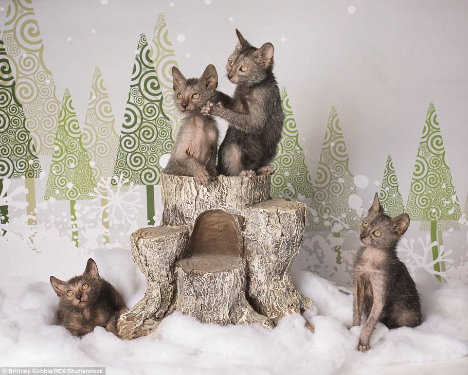 Страшного Різдва: фотосесія котів-перевертнів налякала інтернет  - фото 1