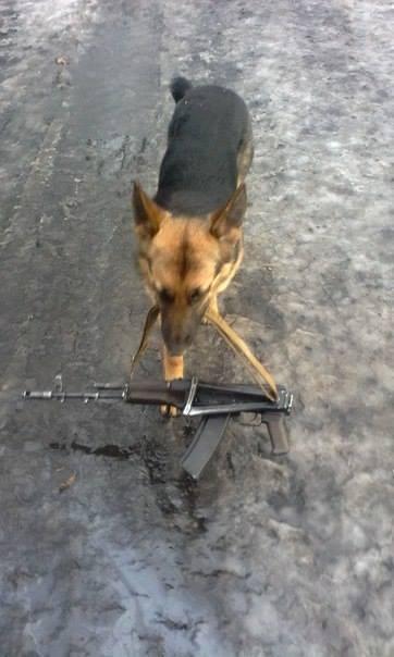Чим займаються на Донбасі найкращі друзі бійців АТО - 6 - фото 5