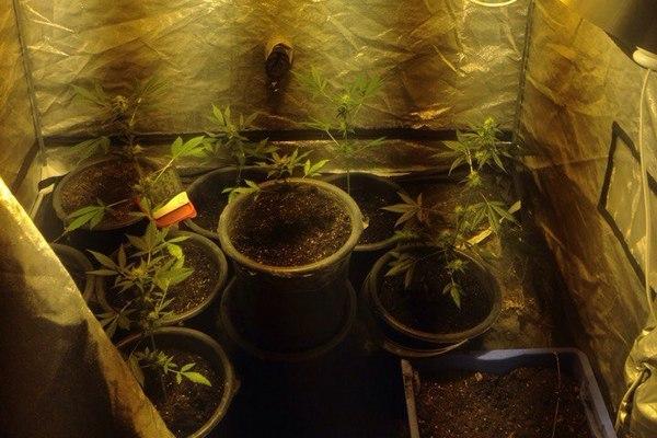 У Харкові судитимуть нарко-агронома  - фото 1