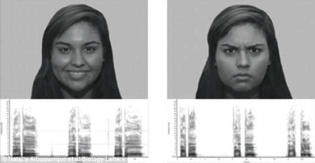 Вчені довели, що собаки вміють розпізнавати людські емоції  - фото 1
