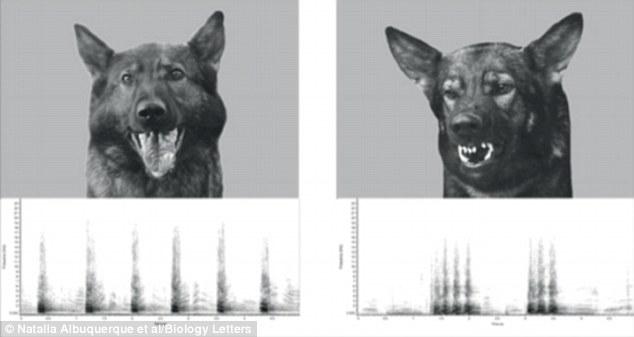 Вчені довели, що собаки вміють розпізнавати людські емоції  - фото 2