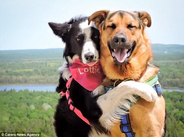 Як двоє собак не можуть припинити обійматися  - фото 1
