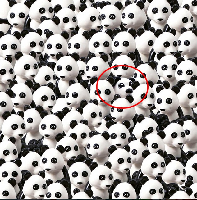 Знайди серед купи панд собаку - фото 2