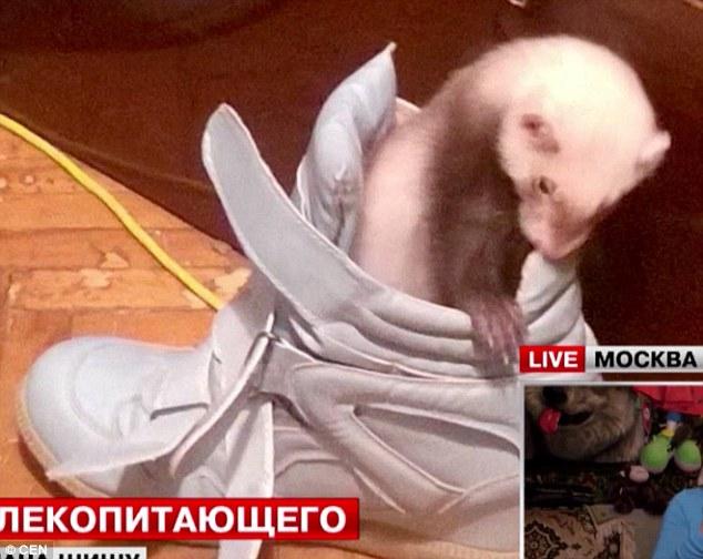 На Росії знайшли тхора-наркомана  - фото 2