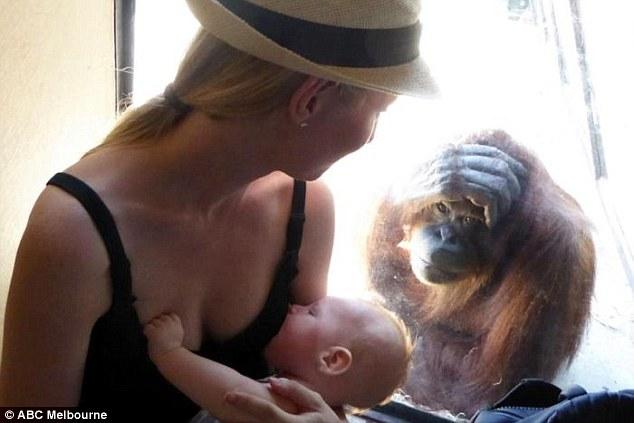 Як орангутанг похвалив жінку, яка годувала груддю немовля  - фото 1