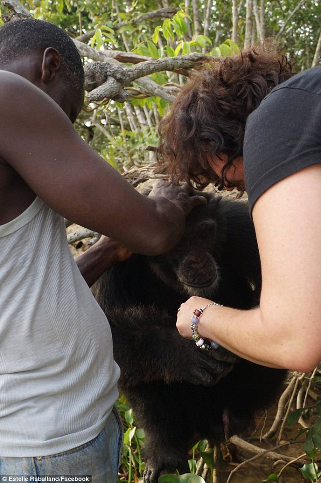 Як мавпа, яка три роки жила сама на острові, кинулася в обійми людині  - фото 1