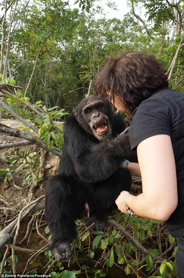 Як мавпа, яка три роки жила сама на острові, кинулася в обійми людині  - фото 2