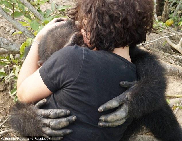 Як мавпа, яка три роки жила сама на острові, кинулася в обійми людині  - фото 3